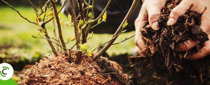 I lavori da fare nel proprio giardino a gennaio